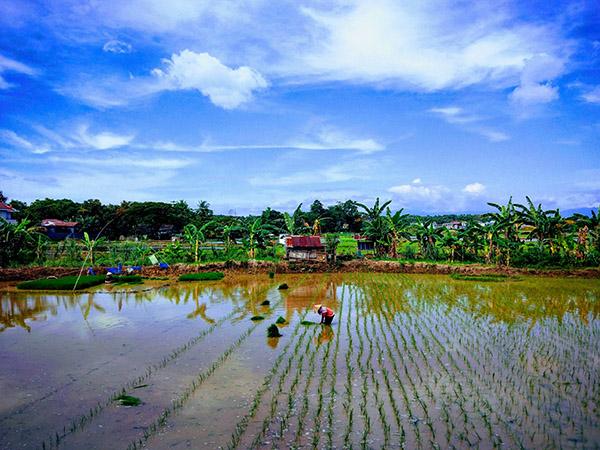 natura isola di sulawesi