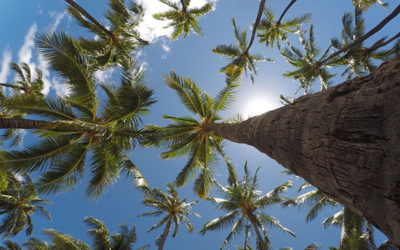 Quando andare in Indonesia: scopri il periodo migliore per il tuo viaggio
