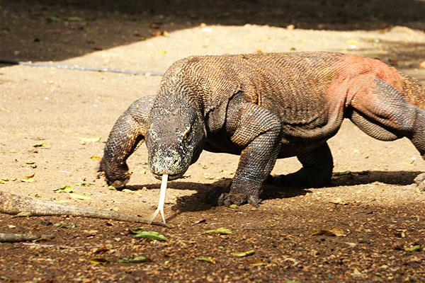 Arcipelago di Komodo: draghi, spiagge e incantevoli paesaggi