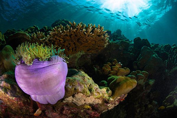 I migliori spot per le immersioni in Indonesia