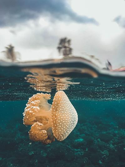 immersioni molucche
